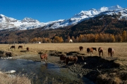 gpphoto_autunno_in engadina